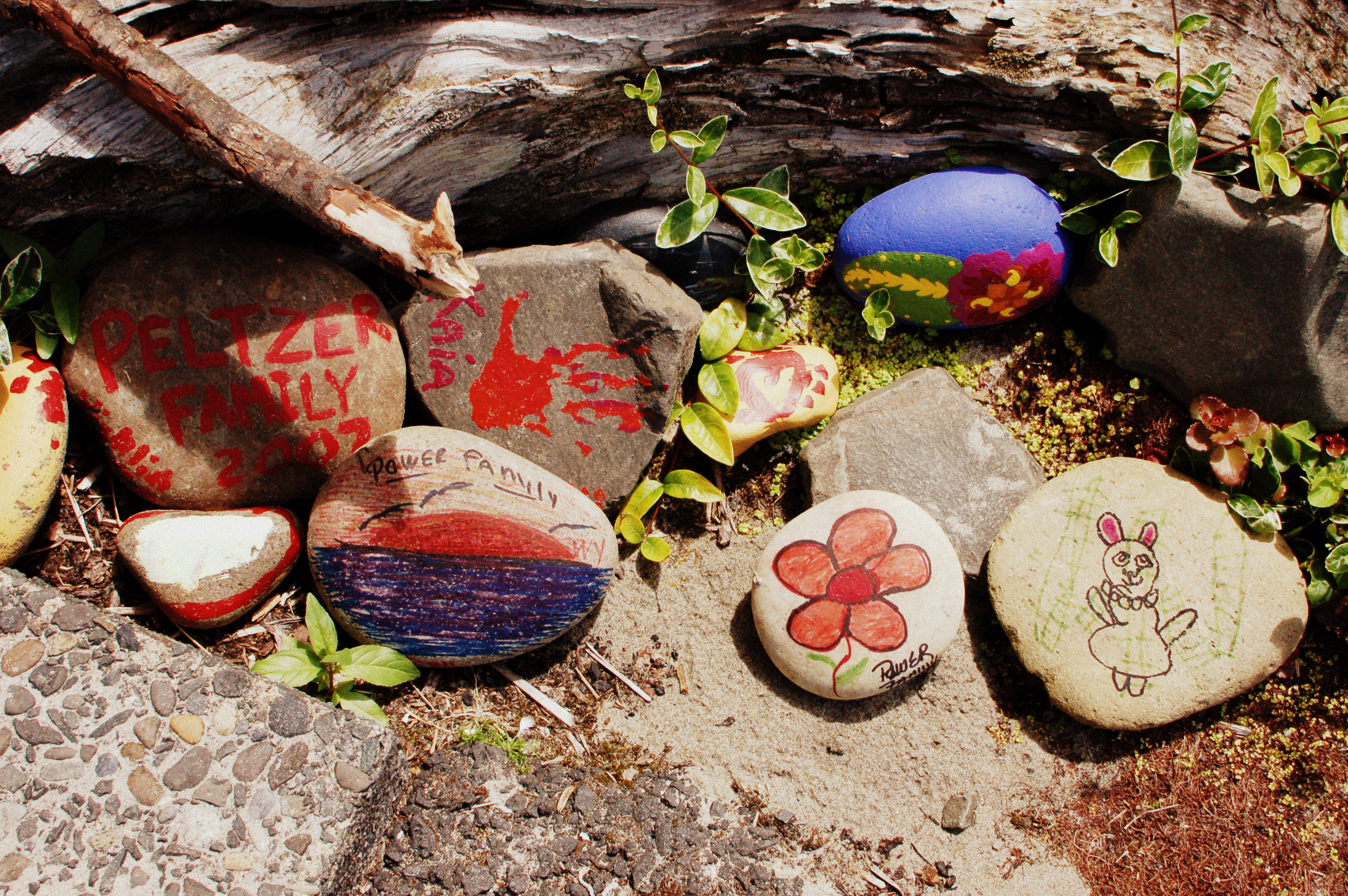 Our rock garden is growing sandy cove inn about sandy cove geenschuldenfo Gallery